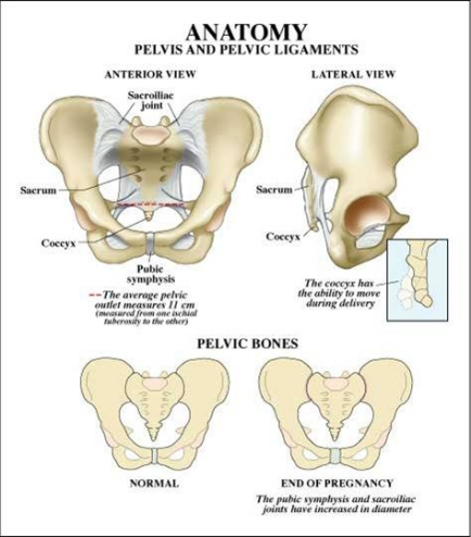 Pelvic Anatomy Related To Shoulder Dystocia